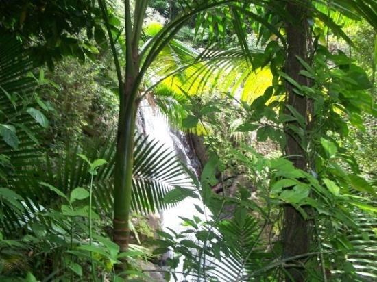 El Yunque National Forest Resmi