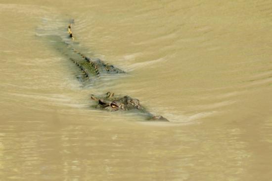 Darwin, Australia: Stealth...