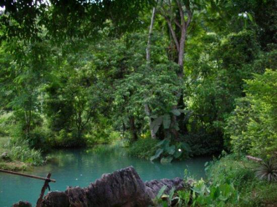 Vang Vieng, Laos: Jungle view.