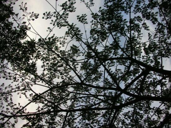 Vang Vieng, Laos: Tree view.