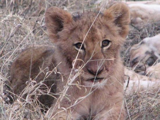Bilde fra Kapama Private Game Reserve