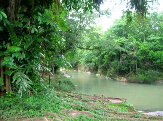 Chukka Caribbean Adventures: Jungle River that we zip lined over...
