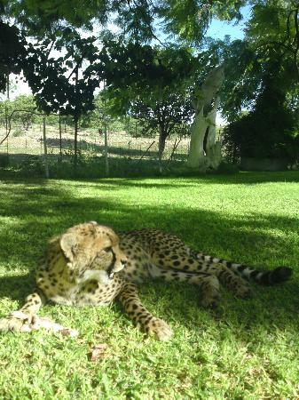 Otjitotongwe Cheetah Park: Cheetah