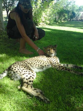 Otjitotongwe Cheetah Park: Schmusestunde