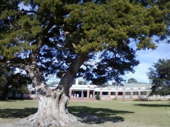 Brunswick, GA: A neat tree
