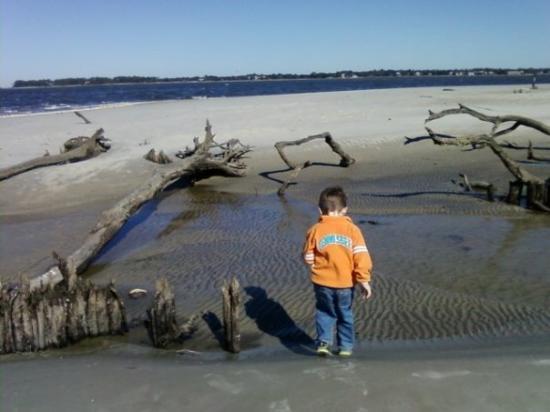 Brunswick, GA: At drift wood beach