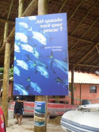Salvador, BA: Projeto Tamar