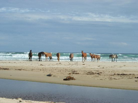 Oyster Bay Lodge: Beach Horse Riding