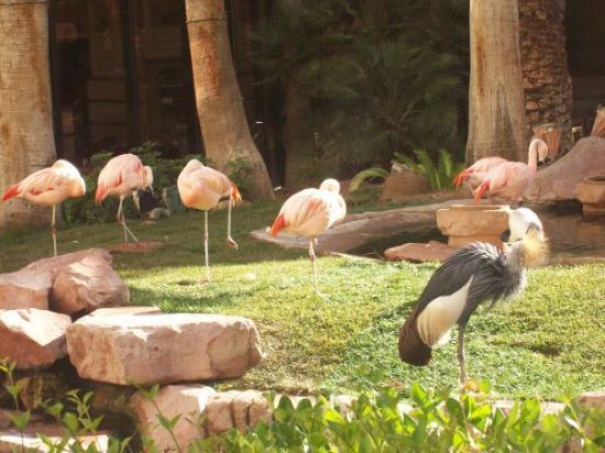 Flamingo Las Vegas Hotel & Casino: Flamingos at the Flamingo hotel