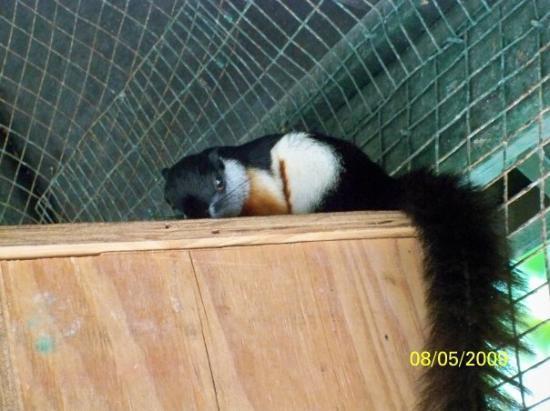 Ardastra Gardens, Zoo and Conservation Center: Squirrel!