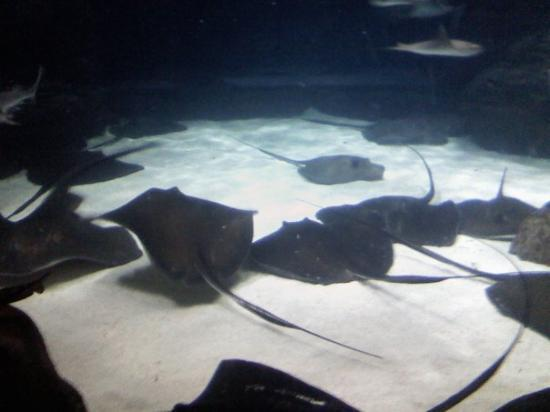 Bilde fra Ripley's Aquarium of the Smokies