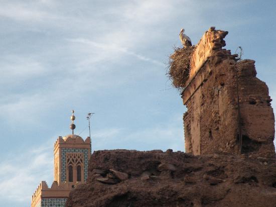 Marrakech, Marokko: Cicogna