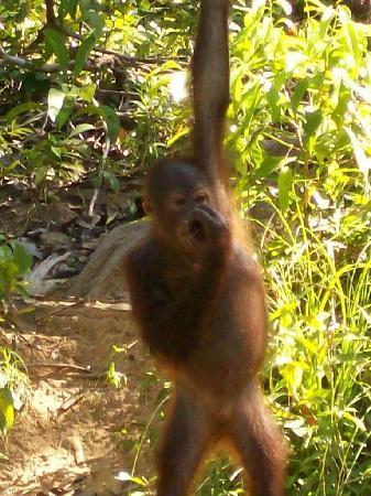 Le Meridien Kota Kinabalu: a local worth visiting