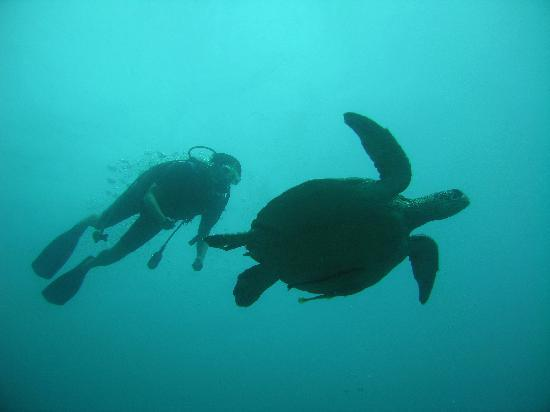 Puri Mas Boutique Resort & Spa: Diving with us gets you up close and personal