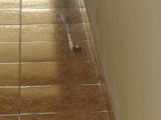 Hotel Los Delfines: Uno dei tanti ricordi lasciati dagli animali nei corridoi