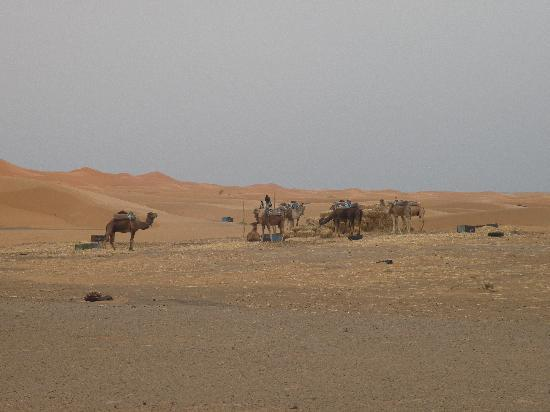 Merzouga Desert: Merzouga Dunes