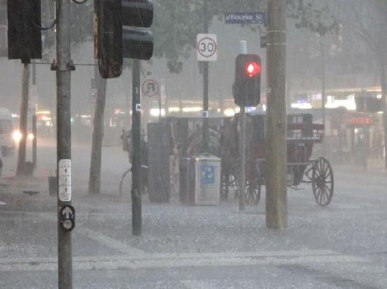 Melbourne, Australia: Horses patiently waiting out the storm