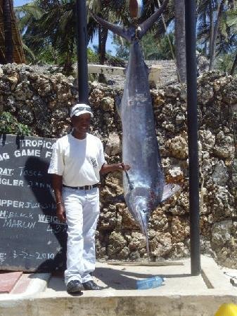 Bamburi Beach Hotel: They caught this fish on a boat trip from the hotel!!!