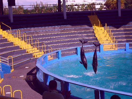 Miami Seaquarium: seaquarium2