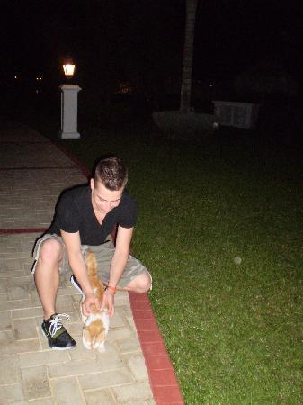 Grand Bahia Principe Jamaica: One of many cats found on the resort