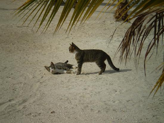 Grand Bahia Principe Jamaica: They are very playful!