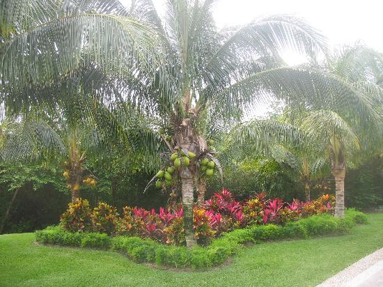 Grand Bahia Principe Coba: More beautiful scenery