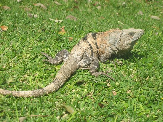 Grand Bahia Principe Coba: Wildlife