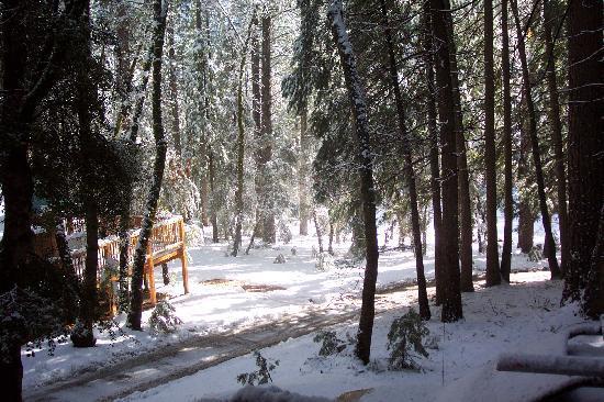 Yuba River Inn: Sun and Snow from the Alder Porch