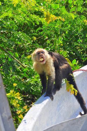 Hotel Riu Guanacaste: We loved the monkeys