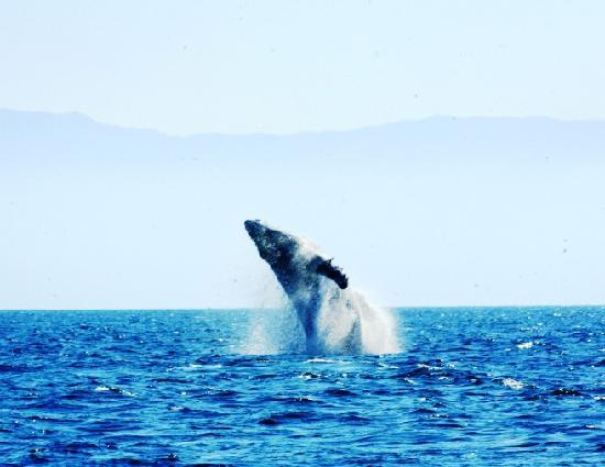 Casa de los Arcos: See the whales from your terrace!