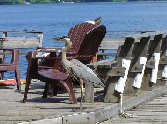Walker Lake Resort: even the herons relax here