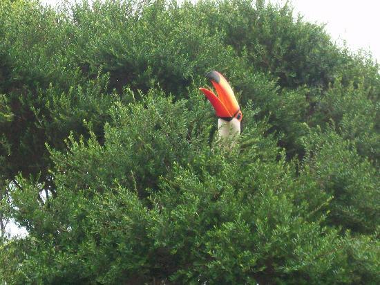 Belmond Hotel das Cataratas: tucan en al jardin del hotel