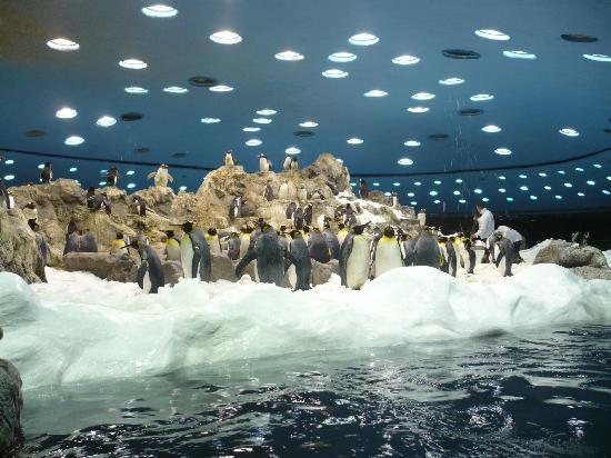 Loro Parque: Planet Penguin including snow !