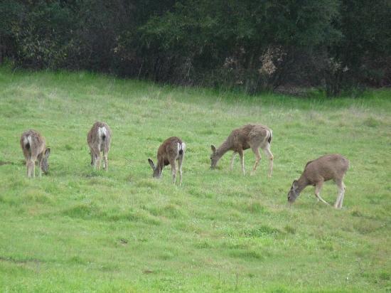 Malibu Creek State Park: Deer were often nearby.