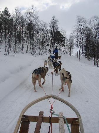 Clarion Collection Hotel With: Lyngsfjord Adventure Dog Sledding