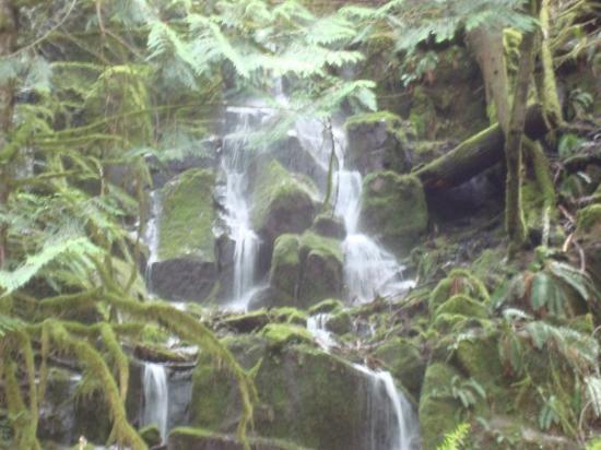 Mount Rainier: Waterfall, Mt. Rainier, Beautiful.
