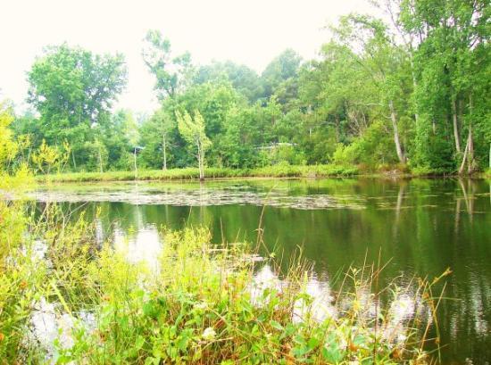 Hope Mills, NC: The pond where chris and i go fishin'...