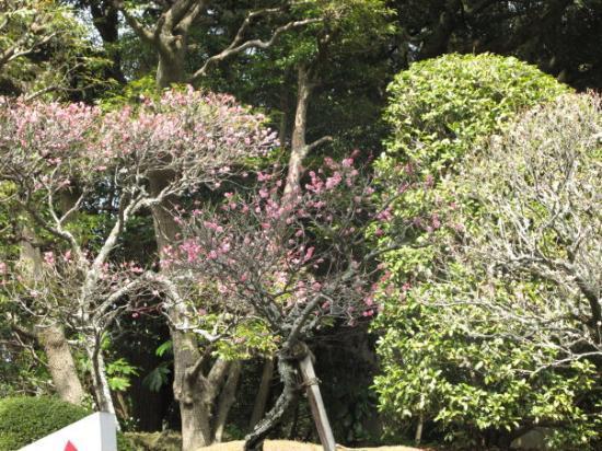Narita, Japan: Sakura is arriving