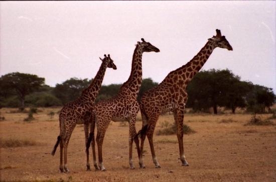 Serengeti National Park, Tanzania: TANZANIA - SERENGETI