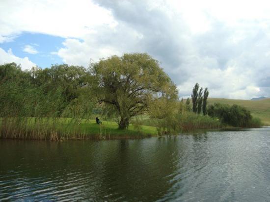 Underberg, Sør-Afrika: DSC08311