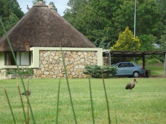 Underberg, Sør-Afrika: DSC08315