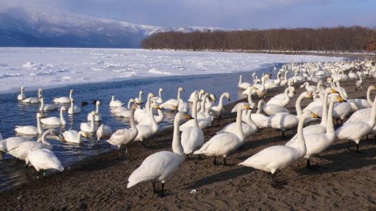 Bilde fra Lake Kussharo