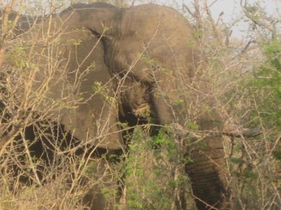 Bilde fra Mlilwane Wildlife Sanctuary