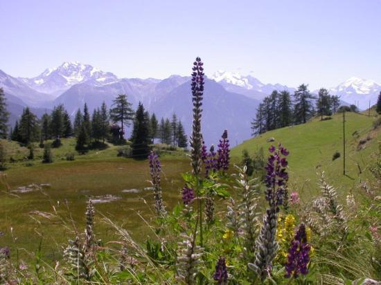 Riederalp, Zwitserland: Dans les Alpes (Suisse 2007)