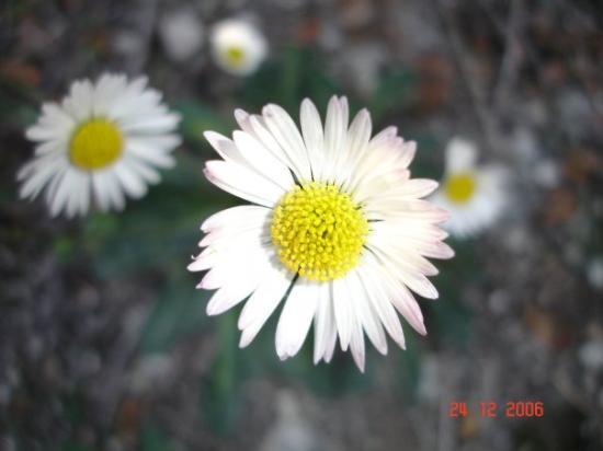 Kalavasos, Cyprus wild flowers
