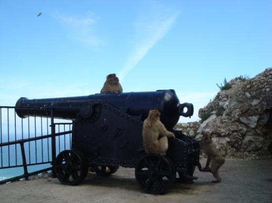 Bilde fra Gibraltar