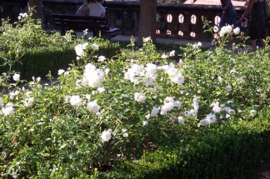 Bamberg's Rose Garden