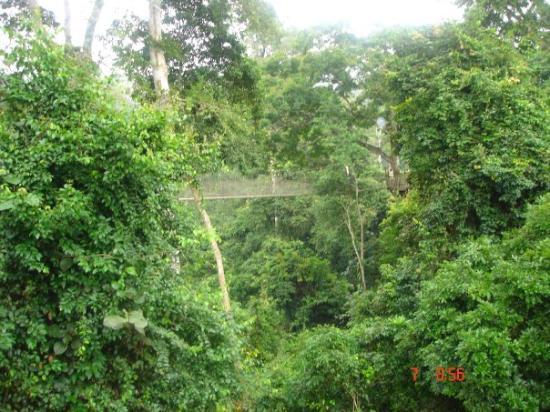 Bilde fra Kakum National Park