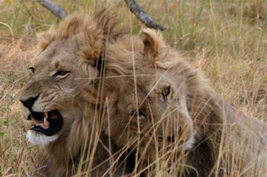Maun, Botswana: Male Bonding