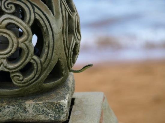 Amber Sands Beach Resort: Harmless, green snake
